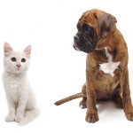 What Does Your Choice of Pet Say About You?