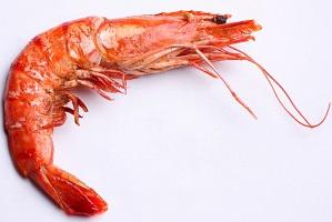 rp_can-dogs-eat-shrimp.jpg