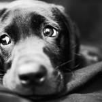 most-dangerous-foods-dogs-150x150