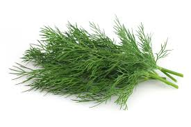 Some chopped  up dill can be used to add flavor and nutrients to homemade dog food.