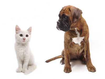 what-does-your-choice-of-pet-say-about-you-cat-or-dogs