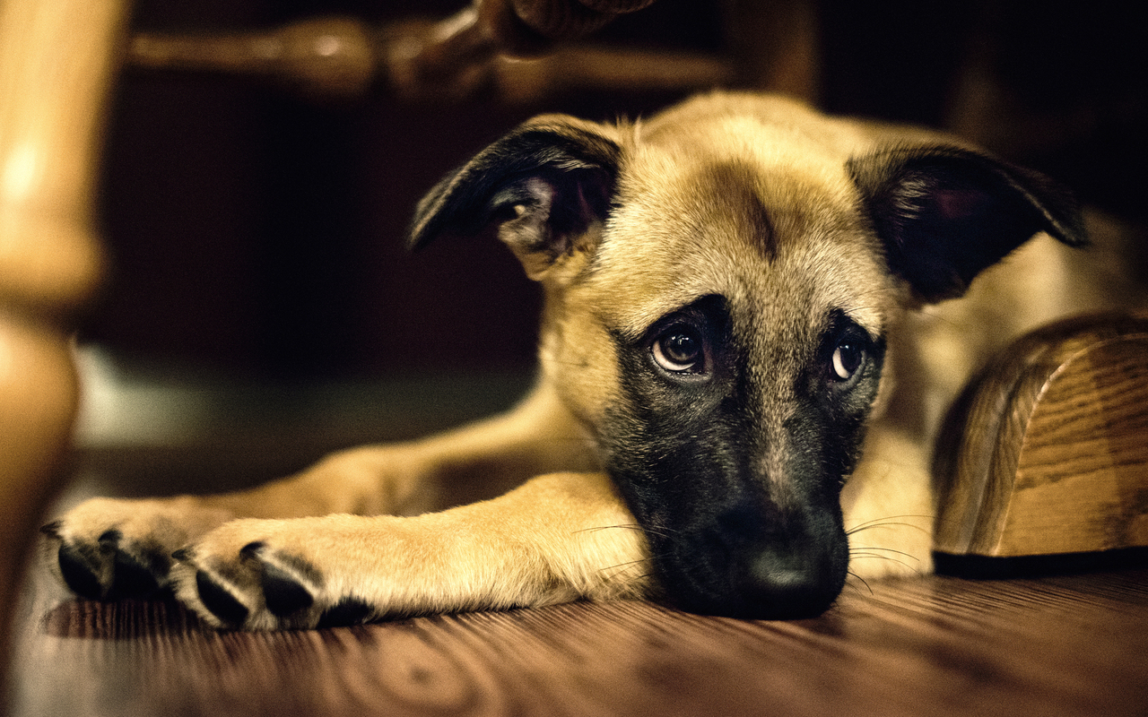 cute dog wallpapers | about doggies