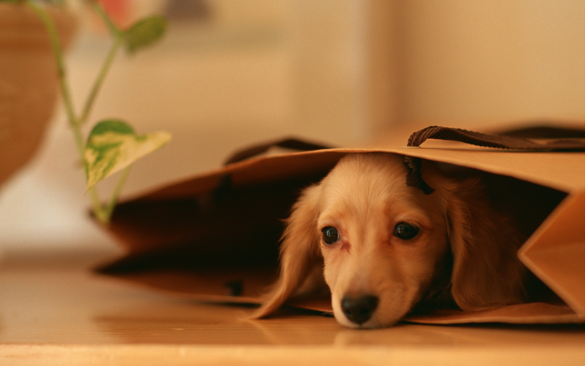 cute dog wallpapers about doggies