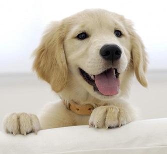 dogs-do-not-need-vitamin-c