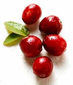 can-dogs-eat-cranberries