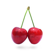 rp_can-dogs-eat-cherries.jpg
